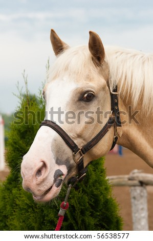 horse head close up - stock photo