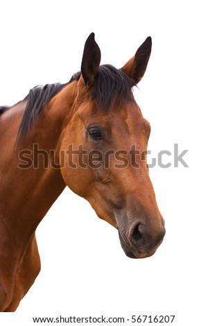 stock photo Horse head isolated