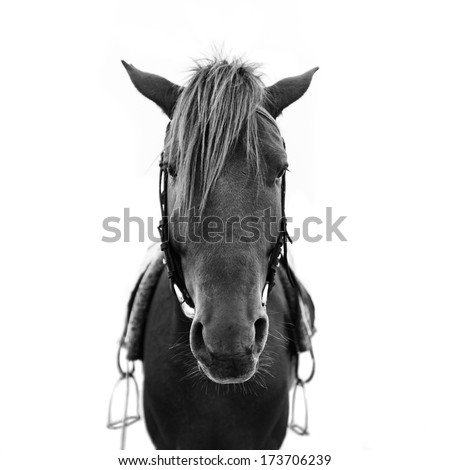Horse head of brown horse