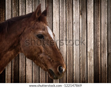 Horse head on wood exterior background
