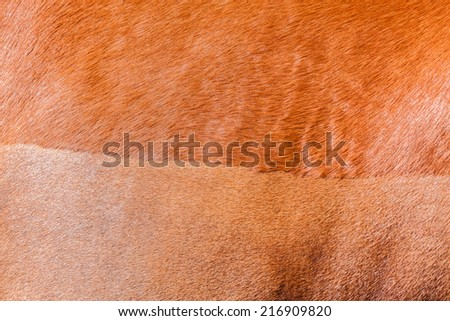 Horse Healthy Animal Horse chestnut animal closeup  hair-cut detail outdoors