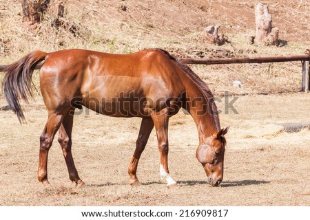 Horse Healthy Animal Horse chestnut animal  detail outdoors
