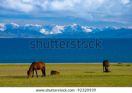 Horse Herd along Sayram Lake, Xinjiang