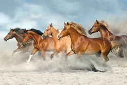 Horse herd  galloping on sandy dust against sky