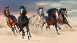 Horse herd run gallop on desert dust against beautiful sunset sky