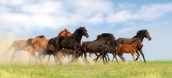 Horse herd run on pasture against beautiful blue sky