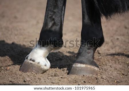 Horse hoof close up