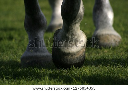 horse hooves on grass moving