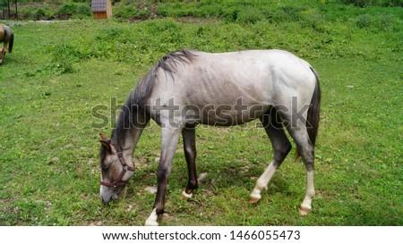 Horse, horses grazing in a meadow on an Alpine meadow #1466055473