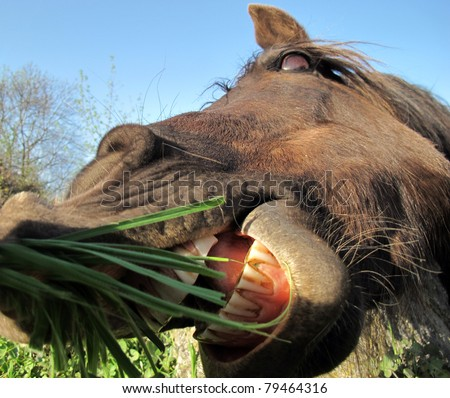 horse huge mouth open to bite
