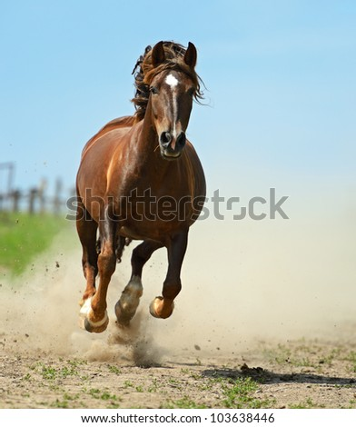 Horse hurrying on a road