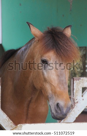 Horse in a Box Stall Inside a Stable, horse farm #511072519