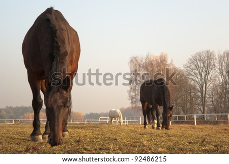 horse in a green meadow in sunny day, animal series