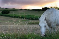 Horse in a landscape in Spain