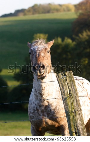 Horse in a pasture land behind a farm fence