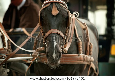 horse in carriage closeup