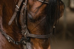 horse in corral or paddock