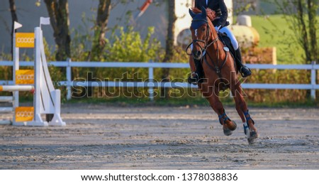 Horse in jumping tournament, photographed in a gallopade between two jumps.