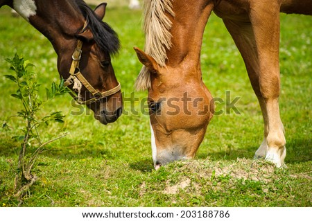 Horse in meadow. Summer day