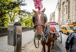 Horse in New York City