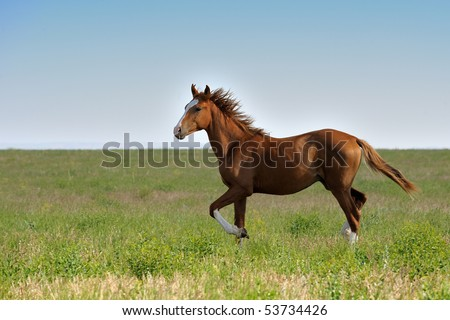 Horse in steppe