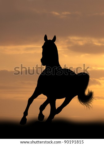 horse in sunrise