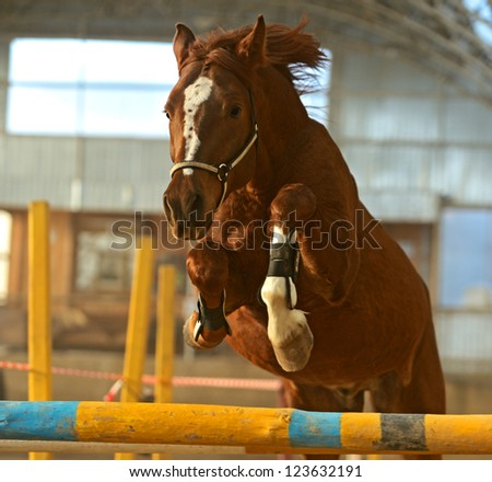 Horse in the arena jumping over obstacles