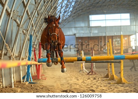 Horse in the arena overcomes obstacles