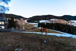 Horse in the Dolomites Mountains