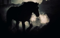 Horse in the early morning