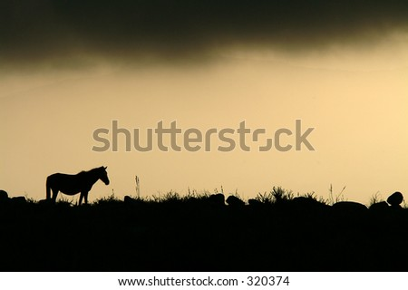 Horse in the mountain