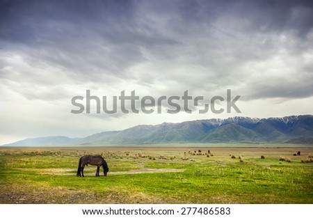 Horse in the mountains at dramatic overcast sky near Alakol lake in Kazakhstan, central Asia