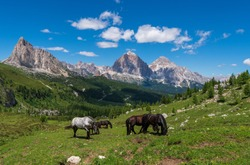 Horse in the mountains at summer , dolomites italy