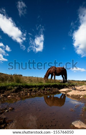 Horse in the nature Stock fotó ©