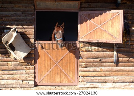 Horse in the window of barn on the farm in Turkey