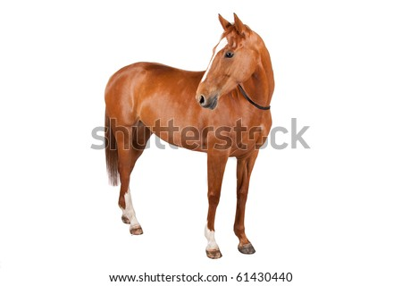 horse isolated on a white background #61430440