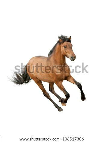 horse isolated over a white