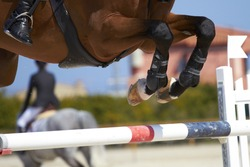 Horse jump a hurdle in a competition/Horse jump