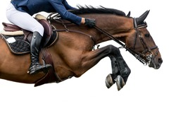 Horse Jumping, Equestrian Sports, Isolated on White Background