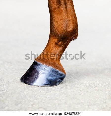 Horse leg with hoof. Skin of chestnut horse. Animal hoof closeup. Square format.