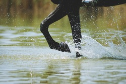 Horse legs in water outdoors