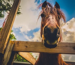 horse look animal nature fence stable mammal portrait mane peasant face sky pet