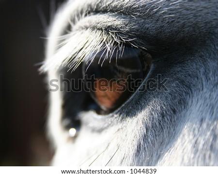 horse macro of eye