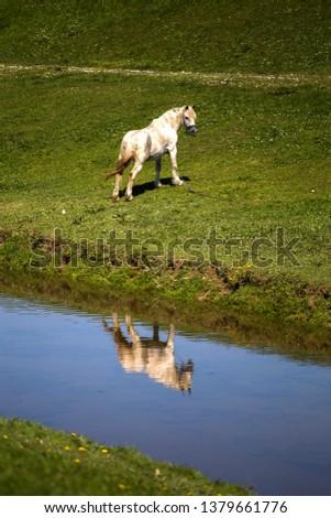 Horse near creek near Lukavec village, Croatia #1379661776