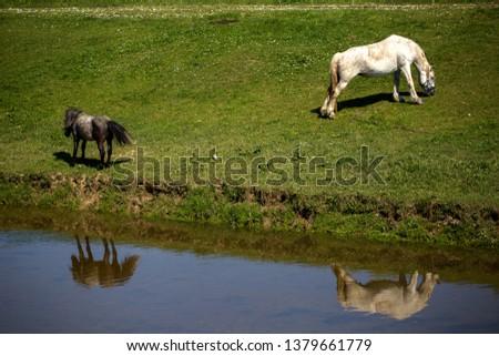 Horse near creek near Lukavec village, Croatia #1379661779