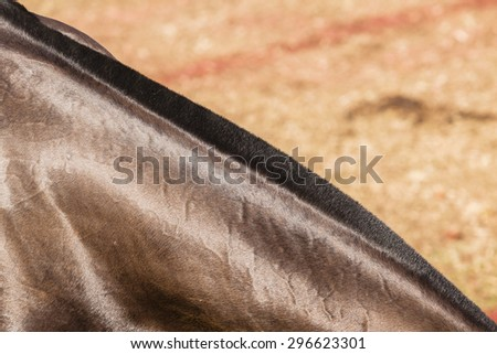 Horse Neck Closeup\ Horse pony grooming neck hair mange body cover closeup abstract animal detail.