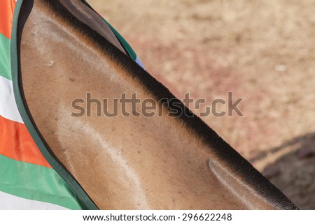 Horse Neck Detail\ Horse pony grooming neck hair mange body cover closeup abstract animal detail.