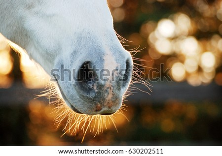Horse nose background with bokeh Zdjęcia stock ©