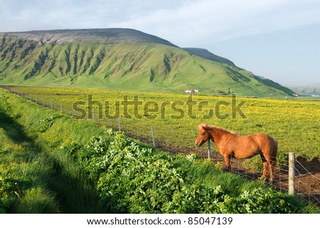 Horse on a farm in southern Iceland - stock photo