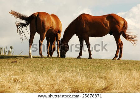 Horse on a pasture. Wind.